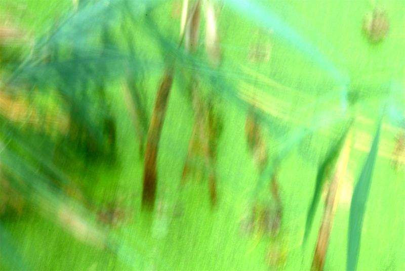 groen (3)-001